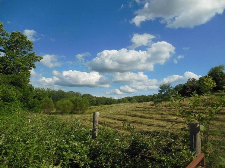 Farmhouse Landscape gosherd