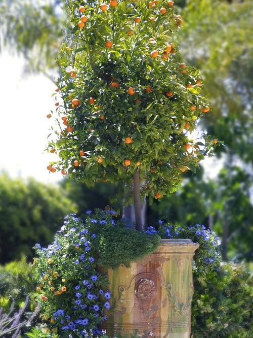 Vintage Flower Pot Houzz