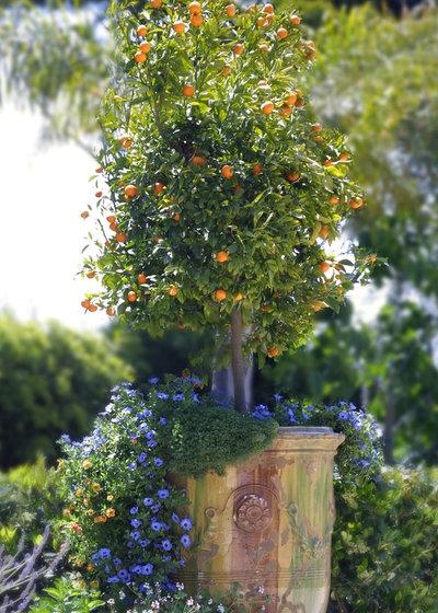 Traditional Garden by Margie Grace - Grace Design Associates