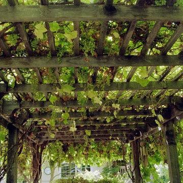 Grape Arbor - Overhead