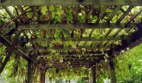 Pérgolas: Descubre las 7 plantas imprescindibles para cubrirla