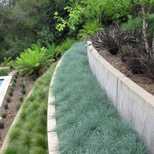 Ispirazione per un giardino contemporaneo con un muro di contenimento