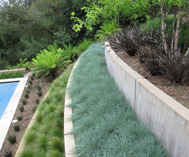 Contemporáneo Jardín by Shades Of Green Landscape Architecture