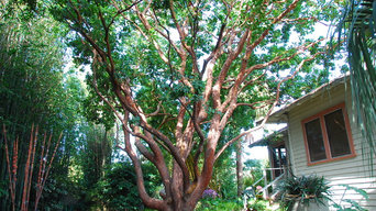 Great Design Plant: Arbutus 'Marina'