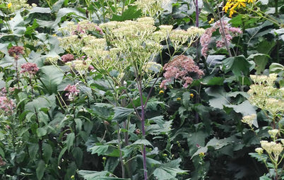 Great Design Plant: Pale Indian Plantain Stands Tall and Proud
