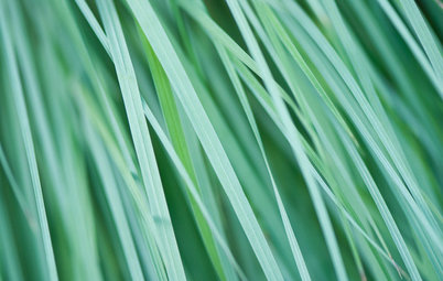 Great Design Plant: Little Bluestem Goes Above and Beyond