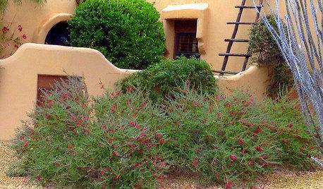 Great Design Plant: Valentine Bush for Heartfelt Winter Color