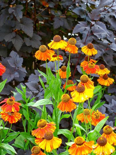 Klassisch Garten by Le jardinet