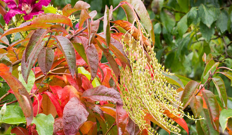Great Design Plant: Sourwood Brings Fiery Fall Color