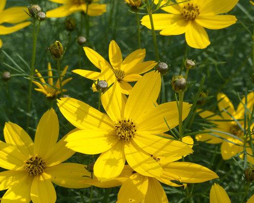 Low maintenance perennial garden houzz for Hardy low maintenance perennials
