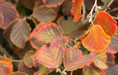 7 ting du bør fikse i haven nu – og du vil juble til foråret