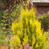Great Design Plant: