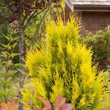 Great Design Plants