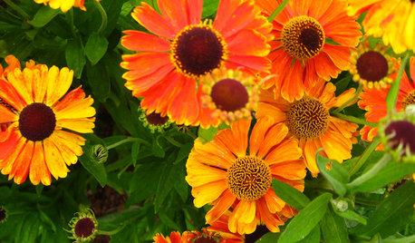 Der Garten im Mai – was jetzt zu tun ist