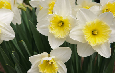 Great Lakes Gardener's April Checklist