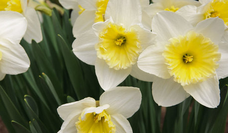 Great Lakes Gardener's April Checklist
