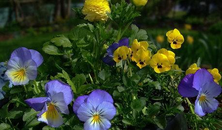 California Gardener's February Checklist
