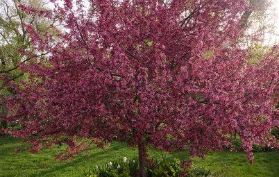 Great Lakes Gardener's May Checklist