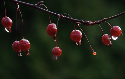 Feed the Birds: 6 Plants for Abundant Winter Berries