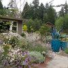 5 Easy Plants for a Romantic Entry Garden