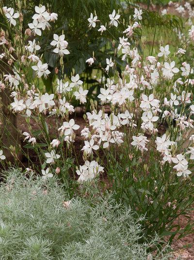 Quelles plantes choisir pour un jardin contemporain for Choisir plantes jardin