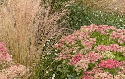 秋色をつくる植物を家の庭で楽しむ