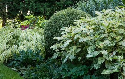 Great Garden Combo: Play With Foliage Patterns in a Border