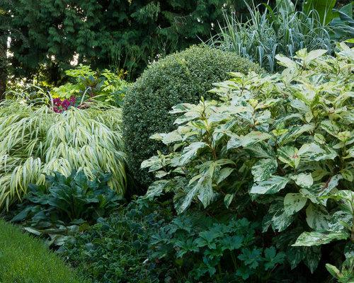 Best mixed shrub border design ideas remodel pictures for Shrubs for garden borders