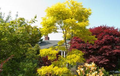 8 Gartenbäume, die gut mit dem Klimawandel zurechtkommen
