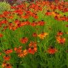 9 Autumn Plants Pollinators Will Love
