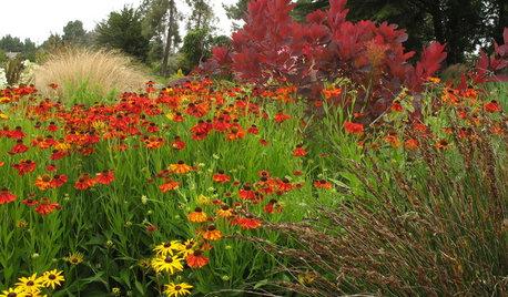Eingepflanzt: 8 tolle Herbstblumen für Garten und Balkon