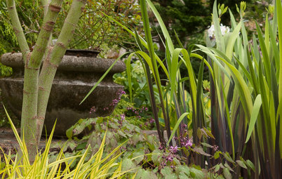 A Great Spring Plant Combo for Dappled Shade