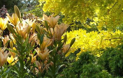 Great Garden Combo: 3 Wonderful Plants for a Deer-Resistant Screen