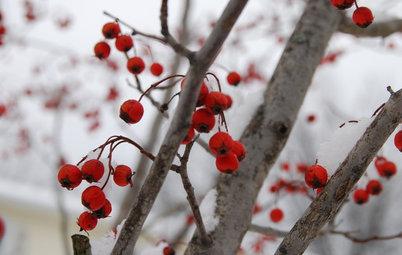 I Nomi delle Bacche Rosse Che Rendono Magico l'Inverno
