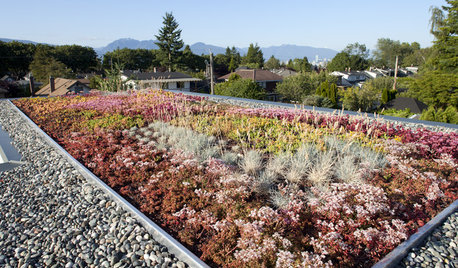 Why You Should Consider Having a Green Roof