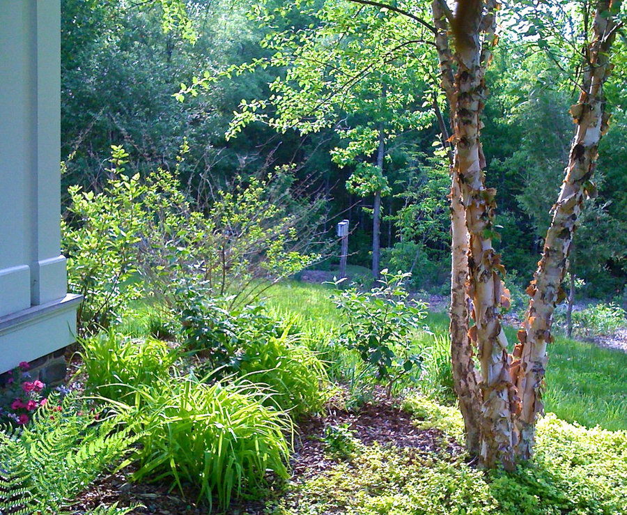 Green Springs:  Growing a New Old Garden