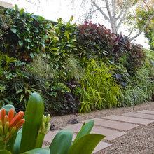Side yard landscaping