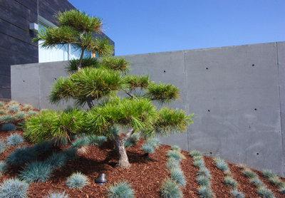 Moderne Jardin by Grounded - Richard Risner RLA, ASLA