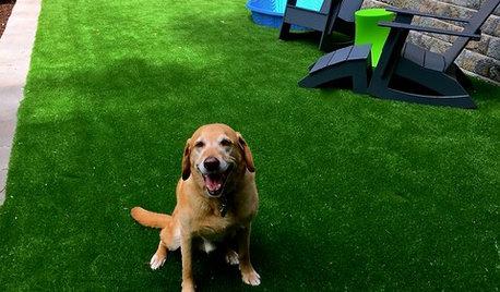 Quand consulter un comportementaliste pour chiens ?