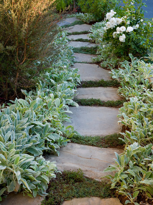 Lambs ear landscaping houzz for Landscaping rocks in los angeles