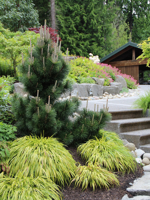Conifer Garden Ideas dave ward and wife pat among their conifers Saveemail Bliss Garden Design