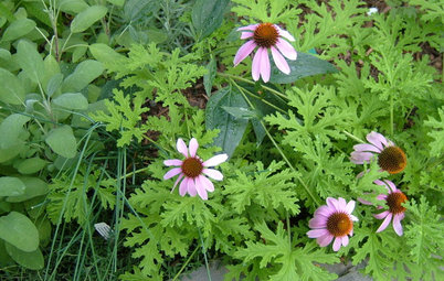 Five Plants for Fighting Mosquitoes