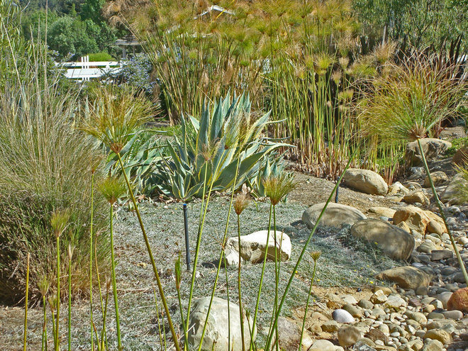 Contemporary Landscape by Stephanie Ann Davis Landscape Design