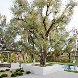 Inspiration for a mid-century modern backyard concrete paver landscaping in Los Angeles.