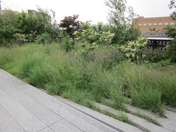 Landscape High Line