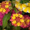 Сад в контейнере: 11 эффектных композиций для вашего балкона