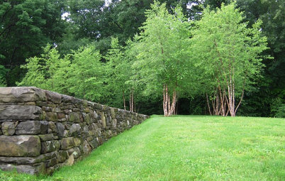 Flood-Tolerant Native Trees for Soggy Soil