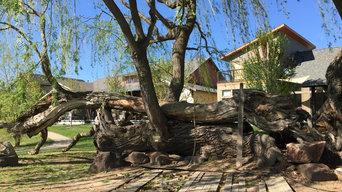 Historical Tree