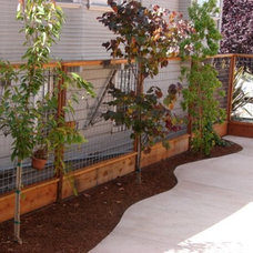 Contemporary Landscape by Sarah Ray Landscape Design