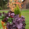 5 Container Gardens for Fall, the Holidays and Beyond